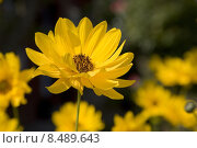 Купить «plant flower garden flowers blossom», фото № 8489643, снято 14 ноября 2018 г. (c) PantherMedia / Фотобанк Лори