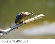 Купить «nature blue orange turquoise disposition», фото № 8492083, снято 24 мая 2019 г. (c) PantherMedia / Фотобанк Лори