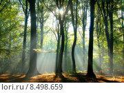 Купить «Beams of light pour through the trees», фото № 8498659, снято 20 февраля 2019 г. (c) PantherMedia / Фотобанк Лори