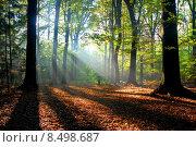 Купить «sunbeams pour into an autumn forest», фото № 8498687, снято 23 февраля 2019 г. (c) PantherMedia / Фотобанк Лори