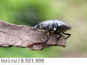 Купить «female animal insect insects beetle», фото № 8501999, снято 20 сентября 2019 г. (c) PantherMedia / Фотобанк Лори