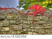 Купить «wall tendrils cirrus feldsteinmauer weinranke», фото № 8520059, снято 16 октября 2018 г. (c) PantherMedia / Фотобанк Лори