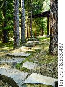 Лестница из камней между деревьев. Иркутск. (2014 год). Стоковое фото, фотограф Evgeniya Kuznetsova / Фотобанк Лори