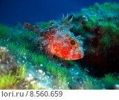 Купить «water sea ocean fish mediterranean», фото № 8560659, снято 18 февраля 2019 г. (c) PantherMedia / Фотобанк Лори
