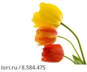 Купить «Tulips», фото № 8584475, снято 24 октября 2018 г. (c) PantherMedia / Фотобанк Лори