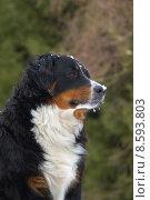 Купить «animal pet dog animals dogs», фото № 8593803, снято 17 июня 2019 г. (c) PantherMedia / Фотобанк Лори