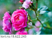 Купить «water plant flower pink drop», фото № 8622243, снято 15 октября 2019 г. (c) PantherMedia / Фотобанк Лори