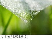 Купить «green water grass meadow lawn», фото № 8632643, снято 15 октября 2019 г. (c) PantherMedia / Фотобанк Лори