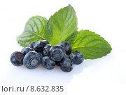 Купить «bilberries,blueberries», фото № 8632835, снято 14 ноября 2018 г. (c) PantherMedia / Фотобанк Лори