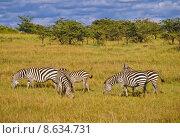 Купить «animal wild safari savannah zebra», фото № 8634731, снято 24 февраля 2019 г. (c) PantherMedia / Фотобанк Лори