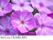 Купить «caucasian european pink blank shrub», фото № 8640491, снято 21 сентября 2019 г. (c) PantherMedia / Фотобанк Лори