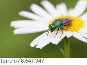 Купить «close up plant macro insect», фото № 8647947, снято 16 октября 2019 г. (c) PantherMedia / Фотобанк Лори