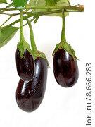 Купить «vegetable branch page sheet eggplant», фото № 8666283, снято 20 июня 2019 г. (c) PantherMedia / Фотобанк Лори