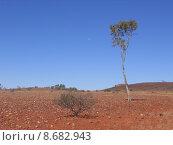 Купить «tree desert outback void emptiness», фото № 8682943, снято 24 августа 2019 г. (c) PantherMedia / Фотобанк Лори