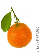 Купить «orange page juice sheet tangerine», фото № 8741083, снято 20 июня 2019 г. (c) PantherMedia / Фотобанк Лори