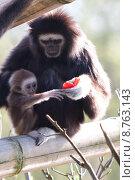 looking view look see monkey. Стоковое фото, фотограф Dmitrij Kauz / PantherMedia / Фотобанк Лори