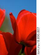 Купить «nature blue red sky plant», фото № 8890807, снято 17 ноября 2018 г. (c) PantherMedia / Фотобанк Лори