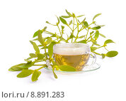 Купить «tea page sheet mistletoe arzneitee», фото № 8891283, снято 20 июня 2019 г. (c) PantherMedia / Фотобанк Лори