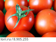 Купить «Red vegetable tomato vitamine paradiesapfel», фото № 8905255, снято 21 октября 2018 г. (c) PantherMedia / Фотобанк Лори