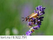 Купить «plant flower insect wasp lavende», фото № 8922791, снято 21 сентября 2019 г. (c) PantherMedia / Фотобанк Лори
