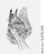 Купить «Белка, рисунок шариковой ручкой», иллюстрация № 9075935 (c) Веснинов Янис / Фотобанк Лори