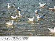 Купить «water group sea ocean many», фото № 9086899, снято 19 января 2020 г. (c) PantherMedia / Фотобанк Лори