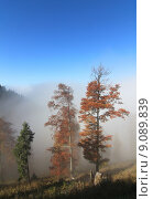 Купить «herbstnebel nebel talnebel quotgoldener oktoberquot», фото № 9089839, снято 22 июля 2019 г. (c) PantherMedia / Фотобанк Лори