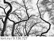 Купить «High Contrast Forest Silhouette», фото № 9136727, снято 23 июня 2018 г. (c) PantherMedia / Фотобанк Лори