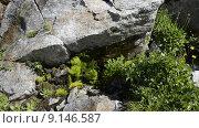 Купить «Вода течет по скале в горах Северного Кавказа», эксклюзивный видеоролик № 9146587, снято 11 августа 2015 г. (c) Алексей Бок / Фотобанк Лори