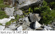 Купить «Вода течет по скале в горах Северного Кавказа», эксклюзивный видеоролик № 9147343, снято 11 августа 2015 г. (c) Алексей Бок / Фотобанк Лори