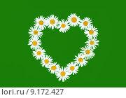 Купить «Daisy in love shape over green background», фото № 9172427, снято 19 сентября 2019 г. (c) PantherMedia / Фотобанк Лори