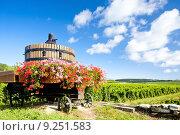 Купить «vineyards of Cote de Beaune near Pommard, Burgundy, France», фото № 9251583, снято 25 января 2020 г. (c) PantherMedia / Фотобанк Лори