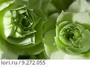 Купить «close up plant flower macro», фото № 9272055, снято 18 января 2019 г. (c) PantherMedia / Фотобанк Лори