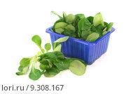 Купить «diet nutrition salad eco conscious», фото № 9308167, снято 26 июня 2019 г. (c) PantherMedia / Фотобанк Лори