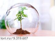 Купить «Protecting a plant», фото № 9319607, снято 19 сентября 2019 г. (c) PantherMedia / Фотобанк Лори