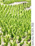 Купить «grand cru vineyards, Cote Rotie, Rhone-Alpes, France», фото № 9331703, снято 21 июля 2019 г. (c) PantherMedia / Фотобанк Лори