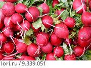 Купить «Tasty organic radish at local market», фото № 9339051, снято 24 апреля 2018 г. (c) PantherMedia / Фотобанк Лори