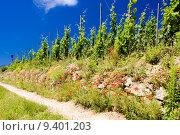 Купить «grand cru vineyard, LŽHermitage, Rhone-Alpes, France», фото № 9401203, снято 21 июля 2019 г. (c) PantherMedia / Фотобанк Лори