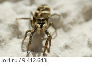 garden legs insect gardens spider. Стоковое фото, фотограф Guido Becker / PantherMedia / Фотобанк Лори