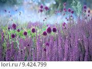Купить «Лук круглоголовый - Allium sphaerocephalon на живописном фоне луга», фото № 9424799, снято 4 июля 2015 г. (c) Татьяна Белова / Фотобанк Лори