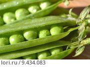 Купить «pea peas pod erbsenschoten sheet», фото № 9434083, снято 20 июня 2019 г. (c) PantherMedia / Фотобанк Лори
