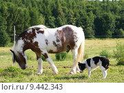 Купить «nature dog horse horses gelding», фото № 9442343, снято 21 марта 2019 г. (c) PantherMedia / Фотобанк Лори