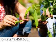 Купить «woman man summer garden vegetable», фото № 9458635, снято 21 ноября 2019 г. (c) PantherMedia / Фотобанк Лори