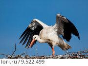 Купить «Stork, Vitoria, Alava, Spain», фото № 9522499, снято 22 октября 2018 г. (c) PantherMedia / Фотобанк Лори