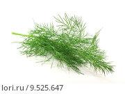 Купить «spice herbs dill culinary fischgew», фото № 9525647, снято 27 июня 2019 г. (c) PantherMedia / Фотобанк Лори