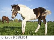 Купить «horse stallion mare gelding willow», фото № 9558851, снято 21 марта 2019 г. (c) PantherMedia / Фотобанк Лори