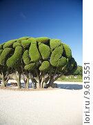 beautiful tree in Madrid park. Стоковое фото, фотограф Iñigo Quintanilla / PantherMedia / Фотобанк Лори