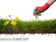 Купить «picking the weeds, please have a look at my similar images of this subject», фото № 9665167, снято 20 марта 2019 г. (c) PantherMedia / Фотобанк Лори