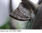 Купить «butterfly swallowtail astgabel blaugestreifter schwalbenschwanz», фото № 9707947, снято 23 января 2019 г. (c) PantherMedia / Фотобанк Лори