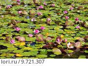 Купить «Blooming of water lilies in pond», фото № 9721307, снято 27 марта 2019 г. (c) PantherMedia / Фотобанк Лори